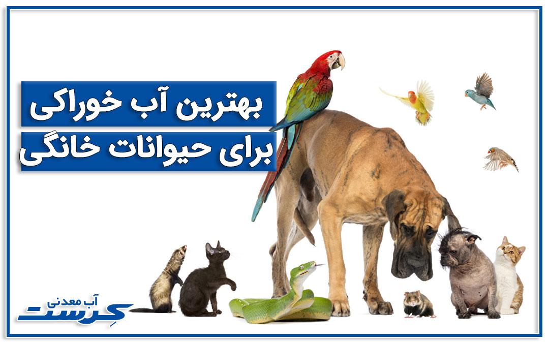 بهترین آب نوشیدنی برای حیوانات خانگی