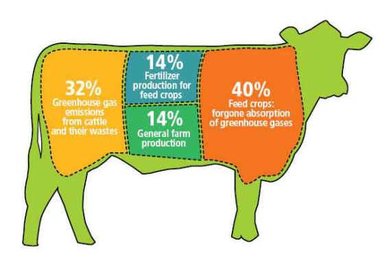 مصرف مقدار کم گوشت یا مصرف نکردن گوشت